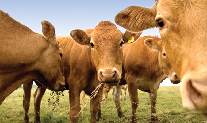 Livestock Protection