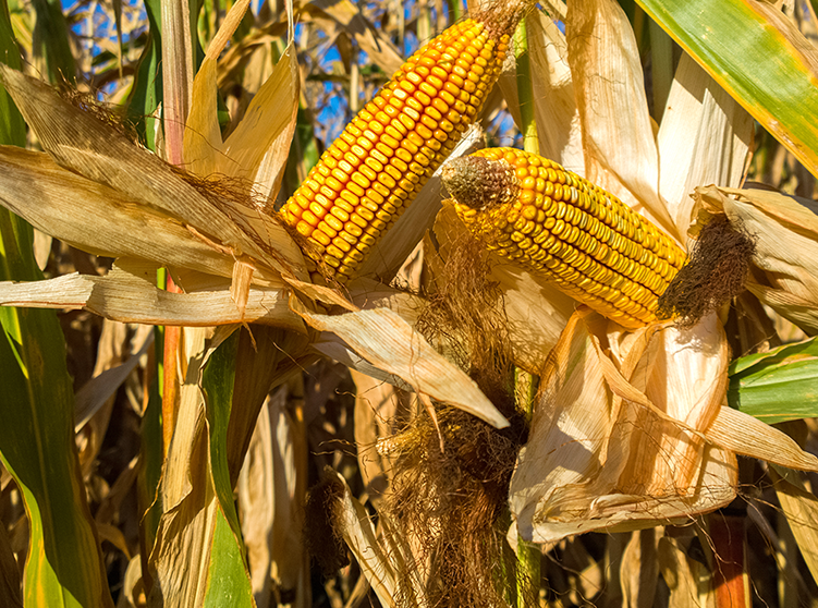 Crop insurance program integrity continues to improve