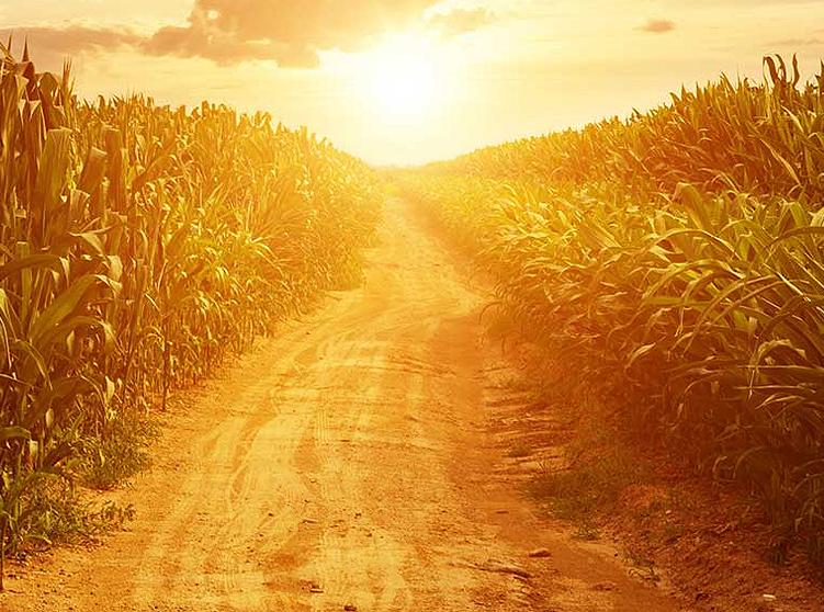Farmers face unrivaled income volatility